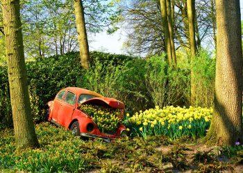 holenderski nie musi byc drogi 350x250 - Niderlnadzki nie musi być drogi